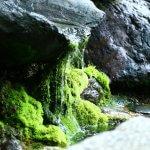京都の天然水が飲めるウォーターサーバーまとめ